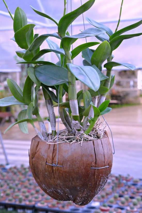 Ideias para Plantar em Cocos