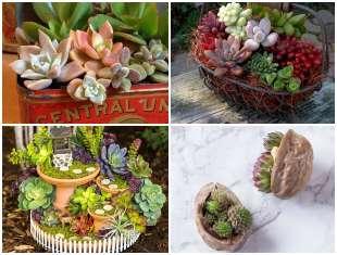 Dicas Criativas para Plantar Suculentas