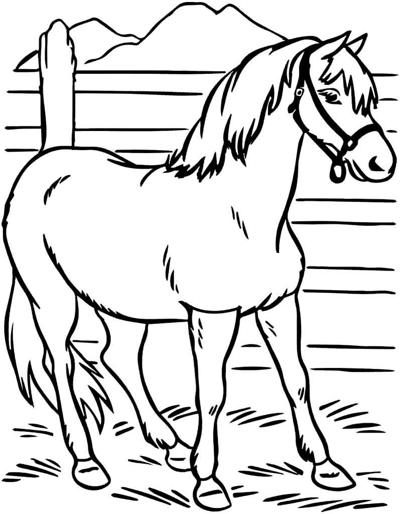 Molde de cavalo para colorir
