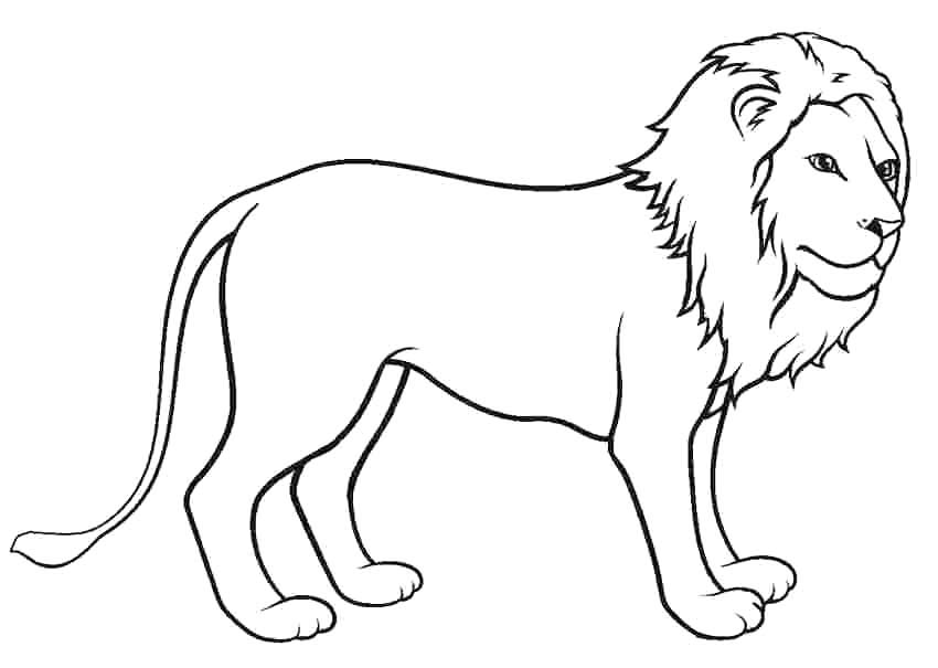 Desenho de leão para colorir