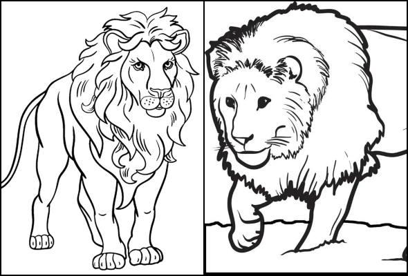 Desenhos de leão para colorir