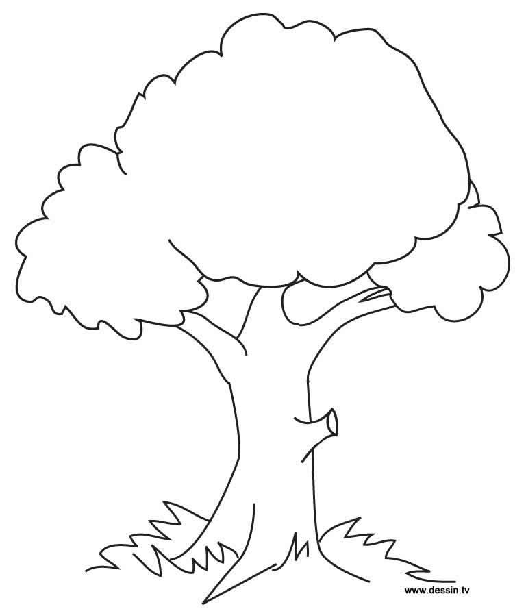 Imagem de árvore para colorir