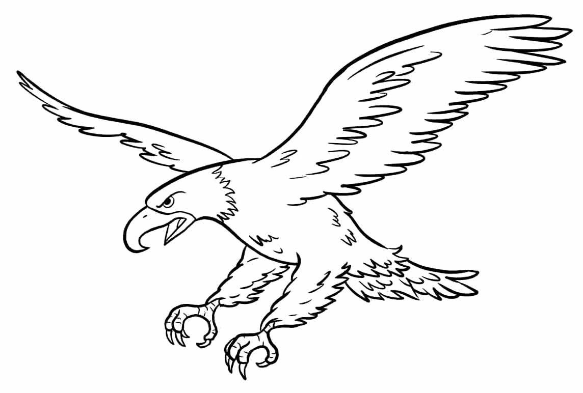 Desenho de águia para colorir