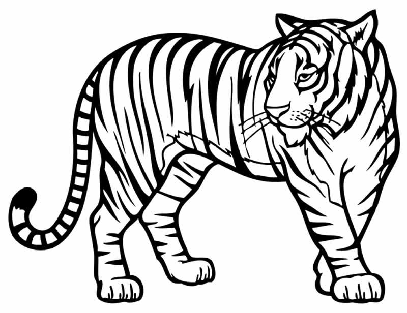 Desenho de tigre para imprimir e colorir