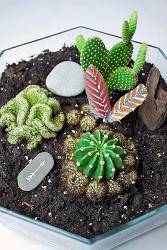Mini jardim lindo com cactos
