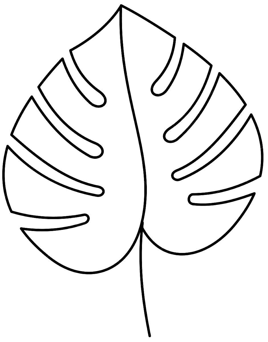 Molde de folha monstera