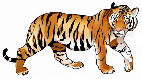 Molde Colorido de Tigre