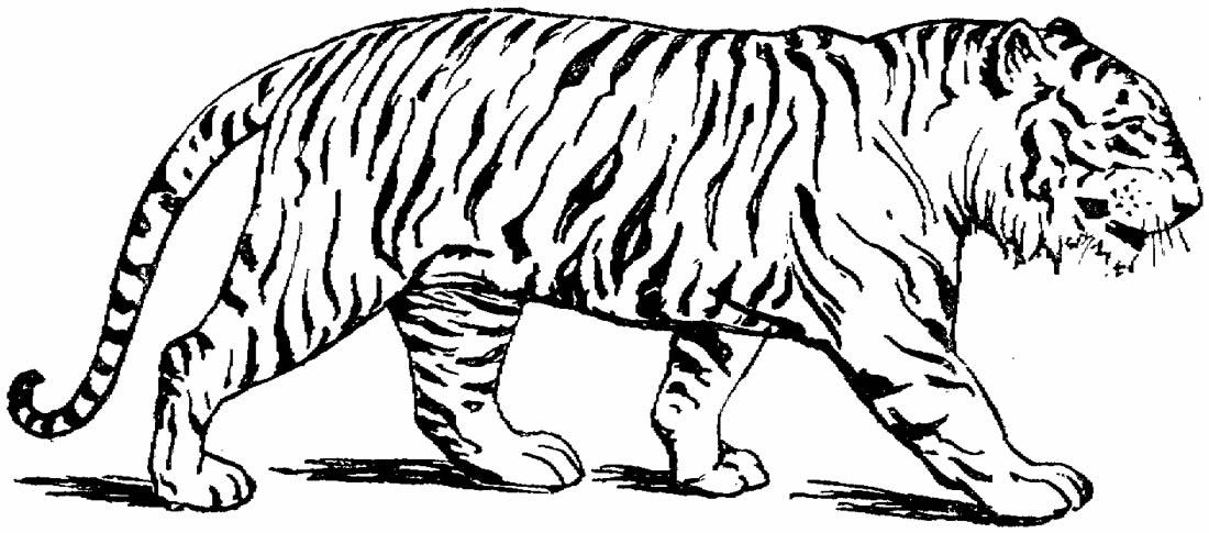 Molde de tigre para imprimir