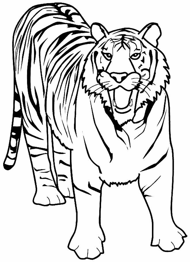 Imagens de tigre para pintar