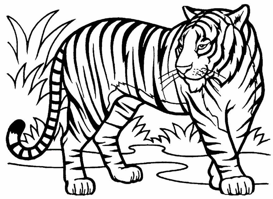 Imagens de tigre para colorir