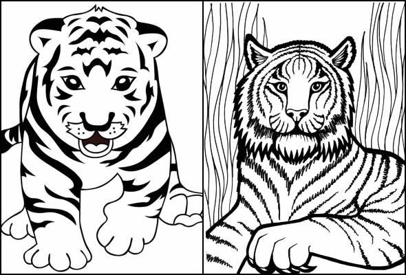 Desenhos de tigre para colorir