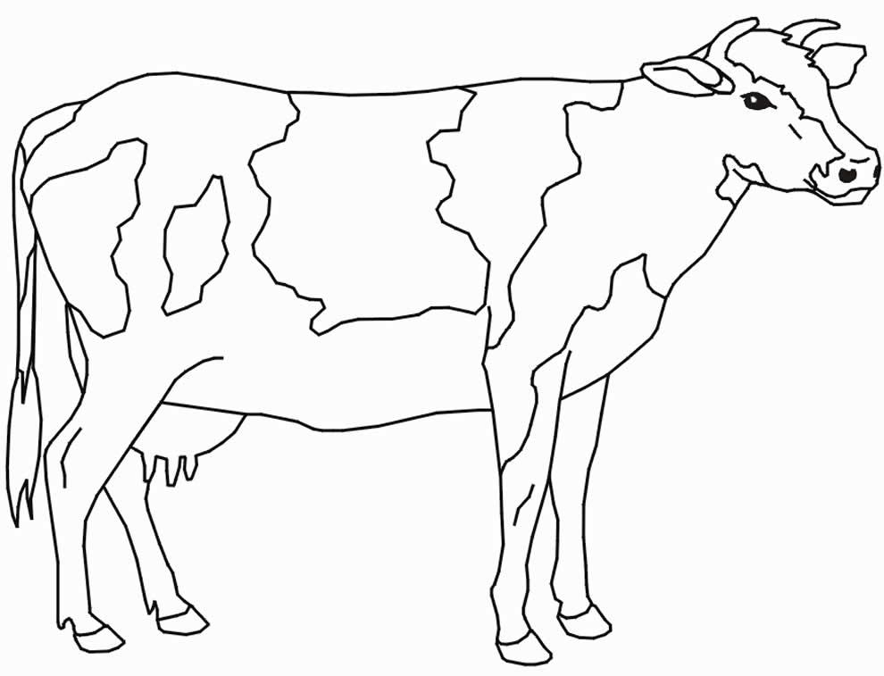 Desenho lindo de vaquinha
