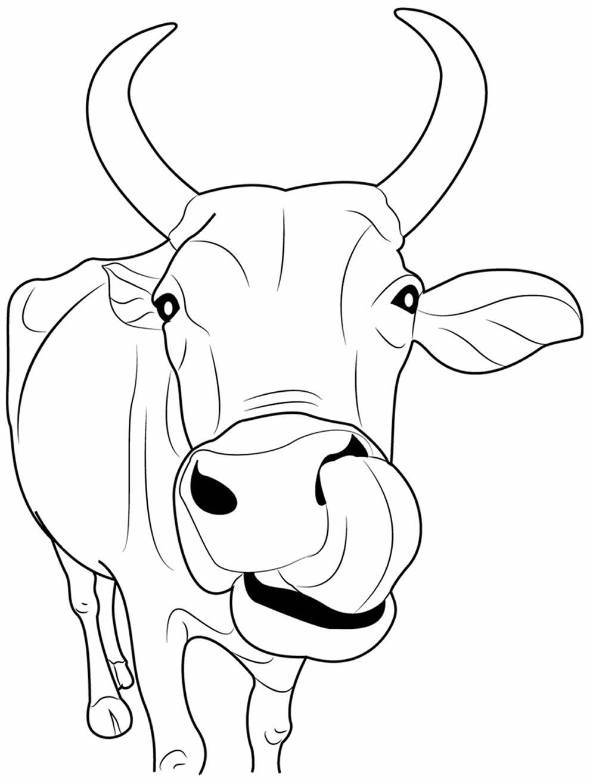 Desenho lindo de vaca