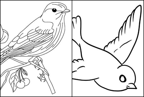 Desenhos de passarinhos para colorir