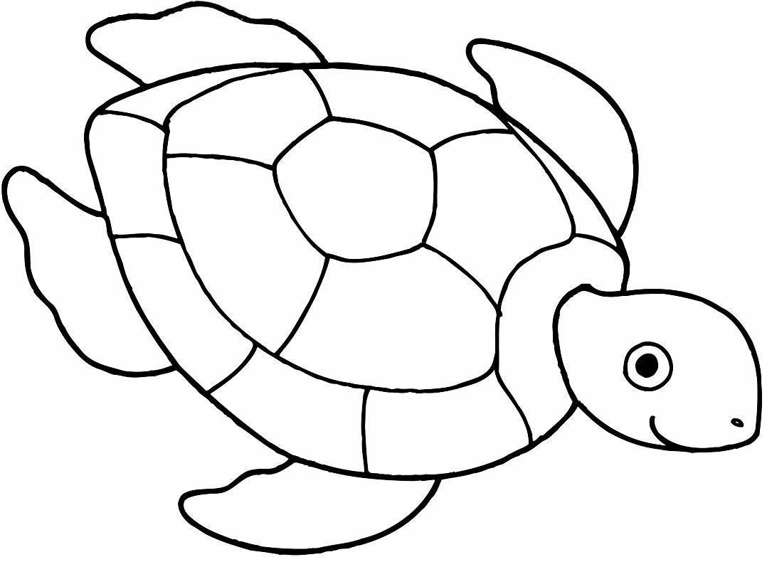 Molde de tartaruga para imprimir
