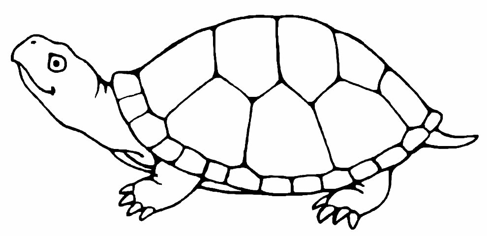 Imagem de tartaruga para pintar