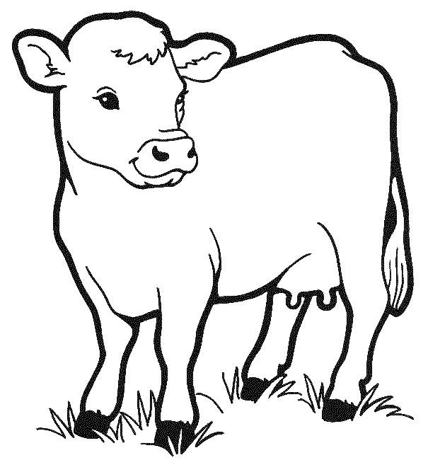 Desenho de vaca para pintar