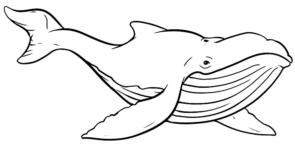 Imagem de baleia para pintar