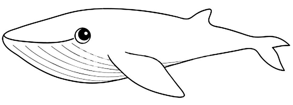 Desenho de baleia para pintar