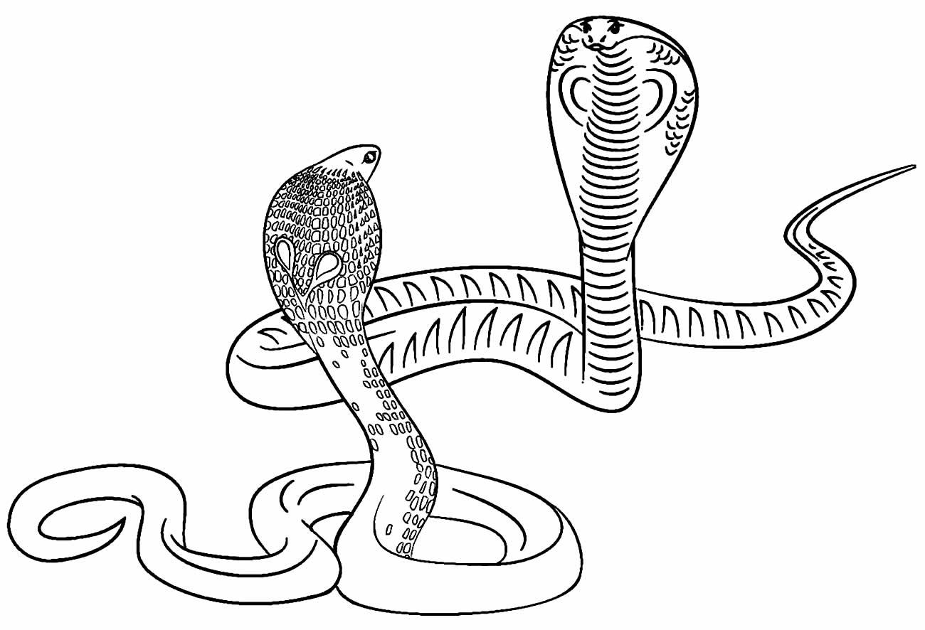 Desenho de cobras para pintar