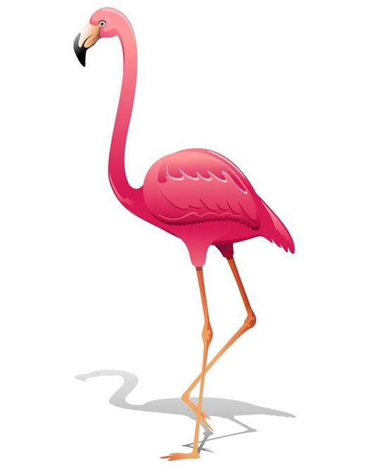 Desenho lindo de flamingo