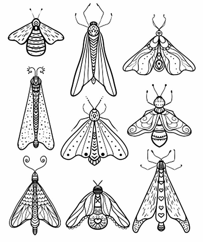 Desenho de insetos para colorir