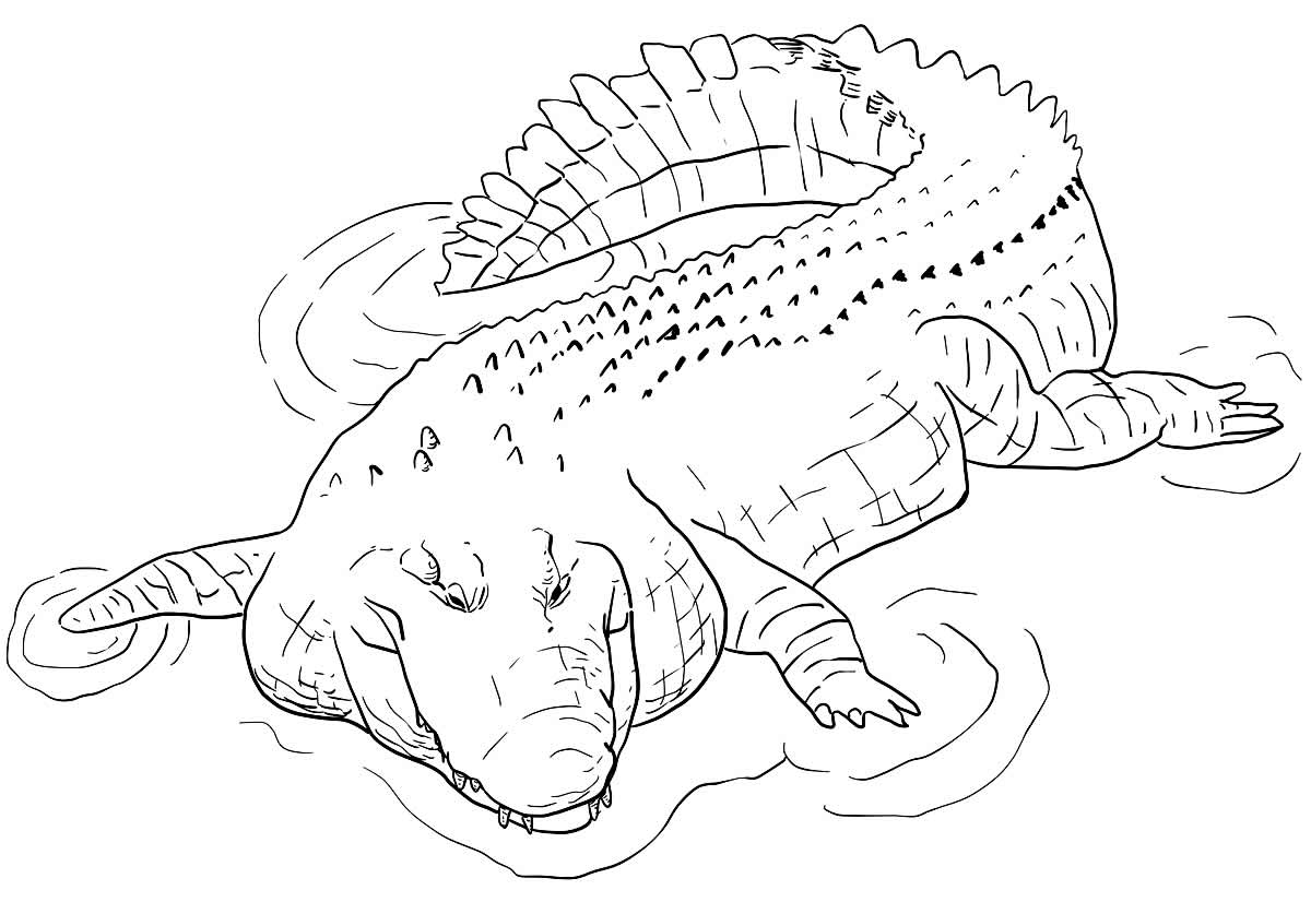 Desenho de jacaré para colorir