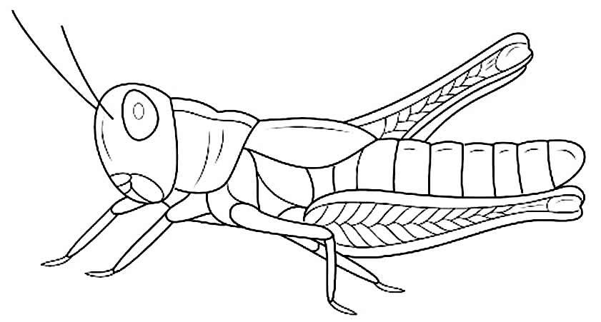 Imagem de inseto