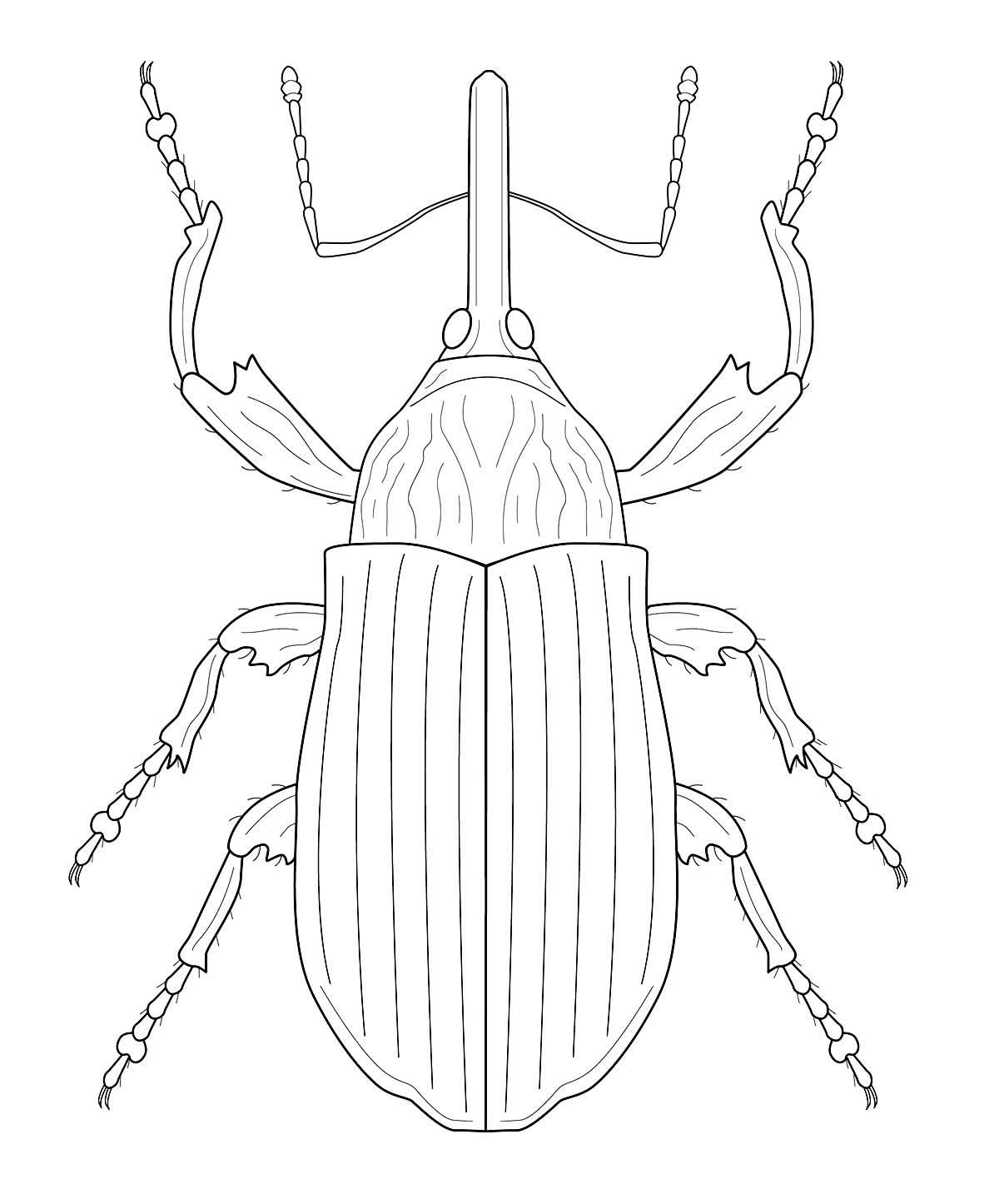 Molde de inseto para imprimir