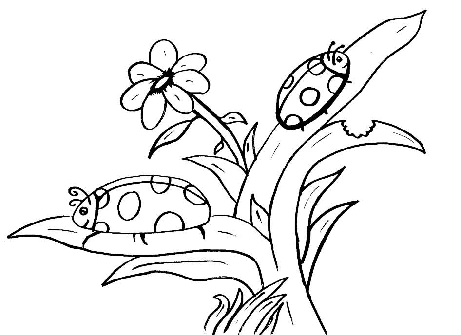 Imagens de insetos para colorir