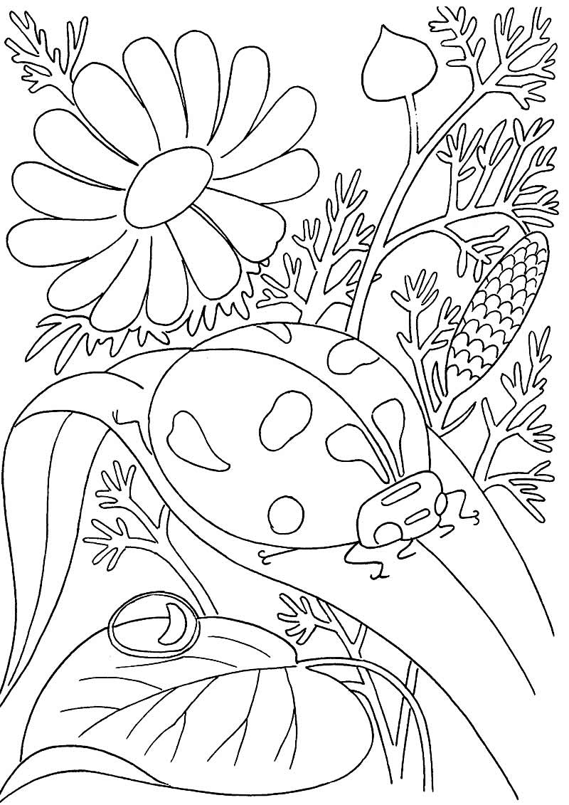 Desenhos de insetos para pintar