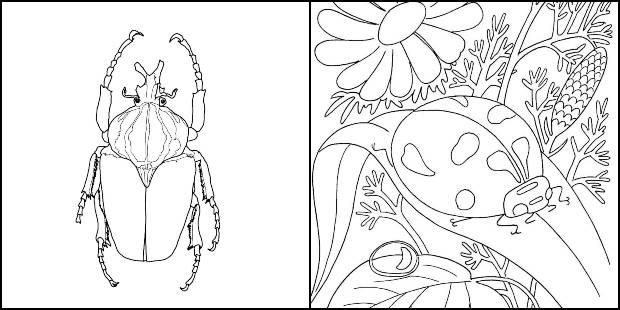 Desenhos de insetos para colorir