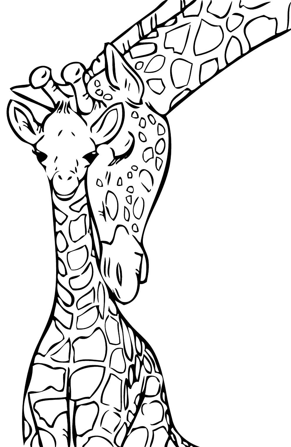 Desenho de Girafas para colorir