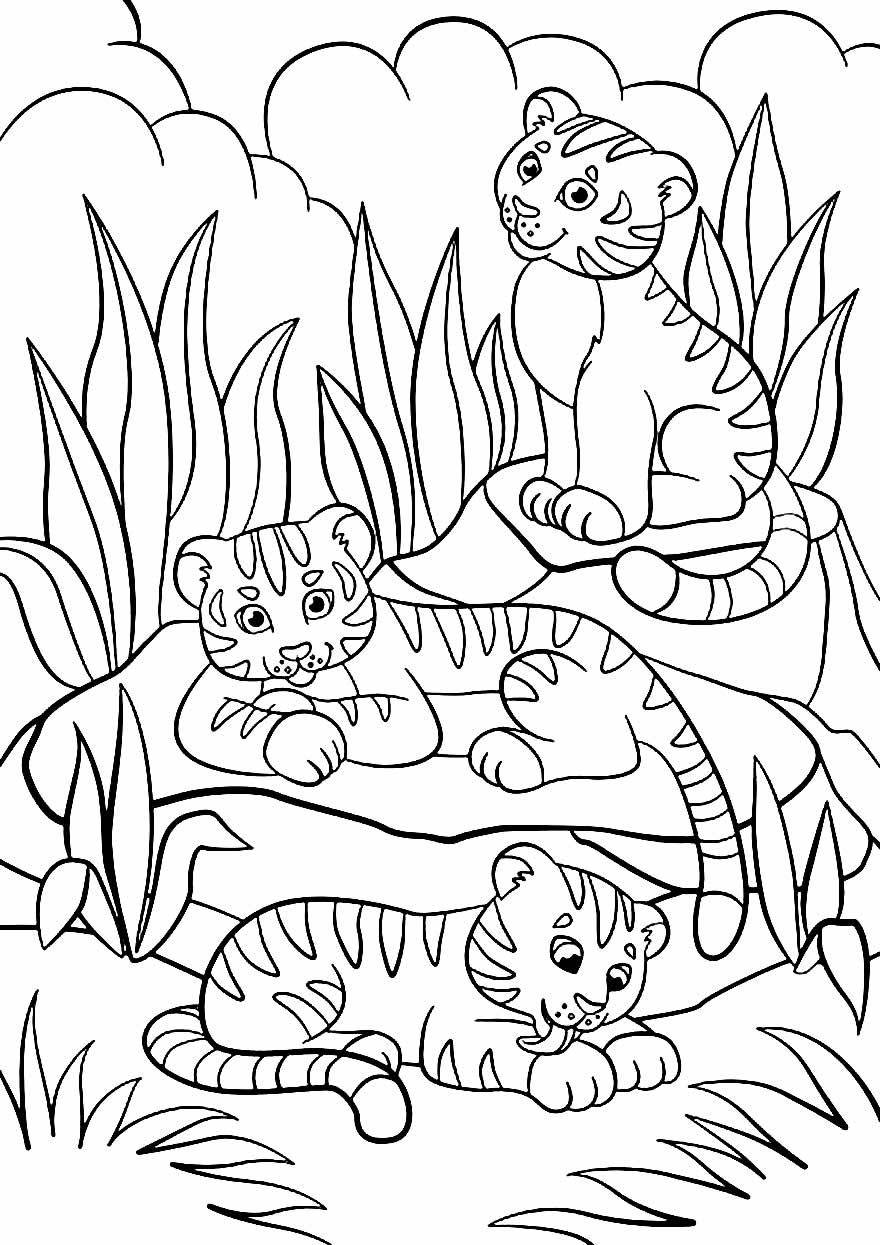 Desenho de Safari para pintar e colorir