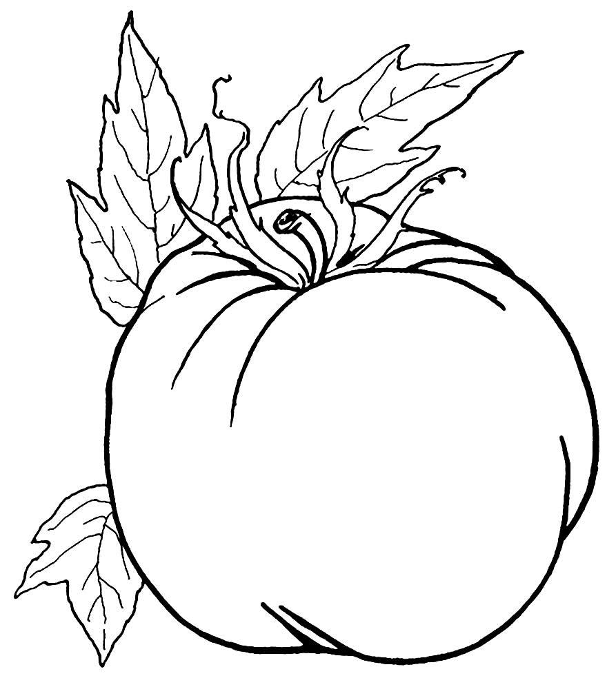 Imagem de tomate para colorir
