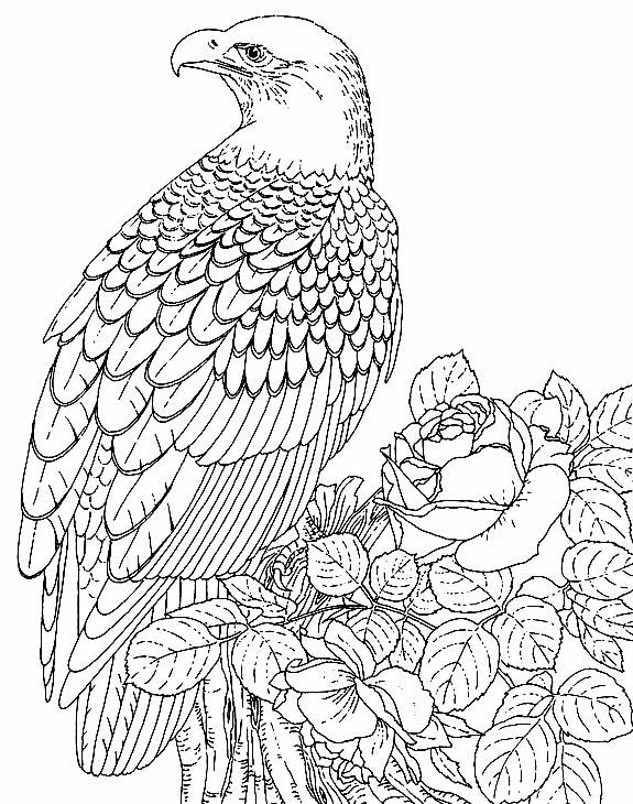 Desenho de Águia para pintar