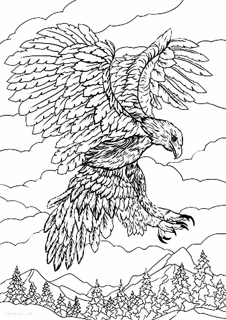 Desenho de águia para colorir e pintar
