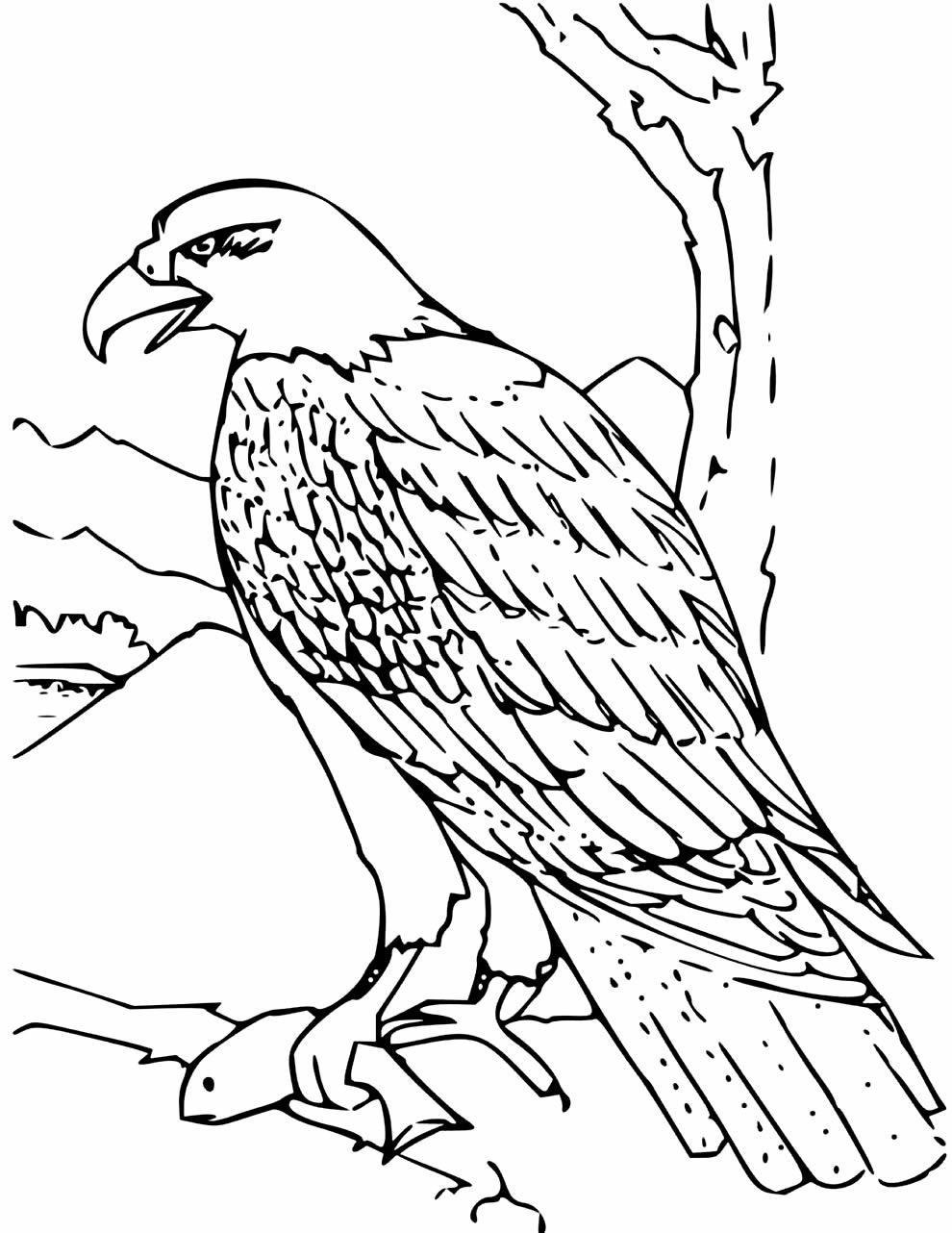 Desenho para colorir de Águia