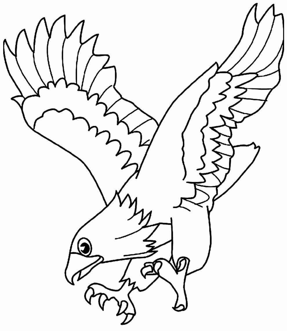 Desenho para pintar de Águia