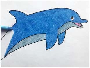 Desenhos de golfinho para colorir
