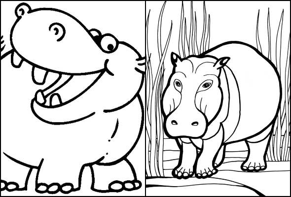 Desenhos de hipopótamo para colorir