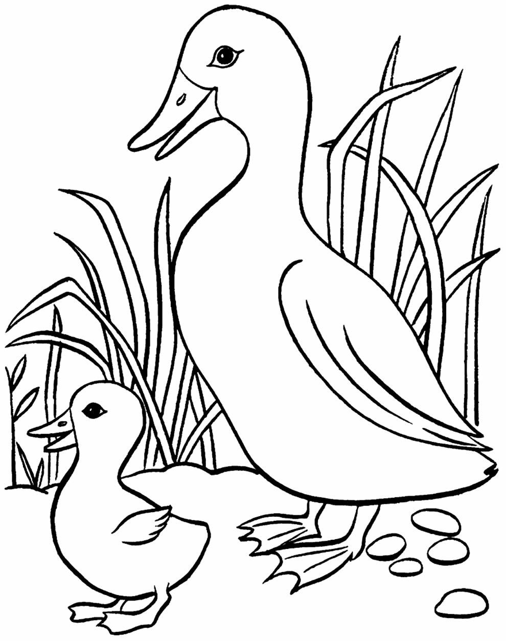 Desenho de pato e patinho para pintar