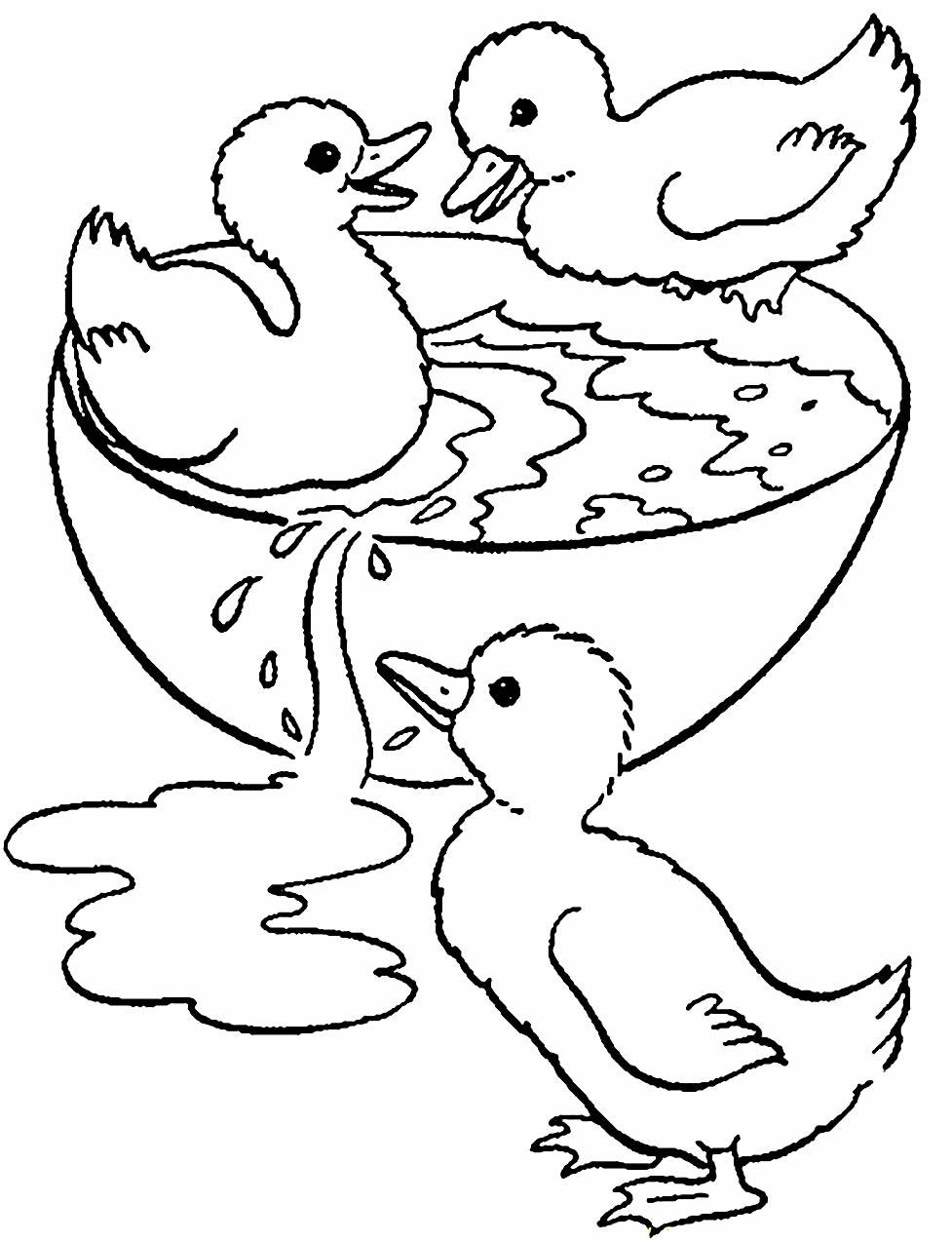Desenho de patos para colorir