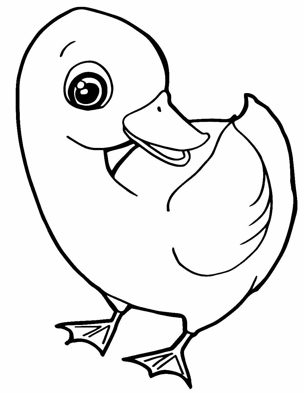 Desenho de pato para colorir