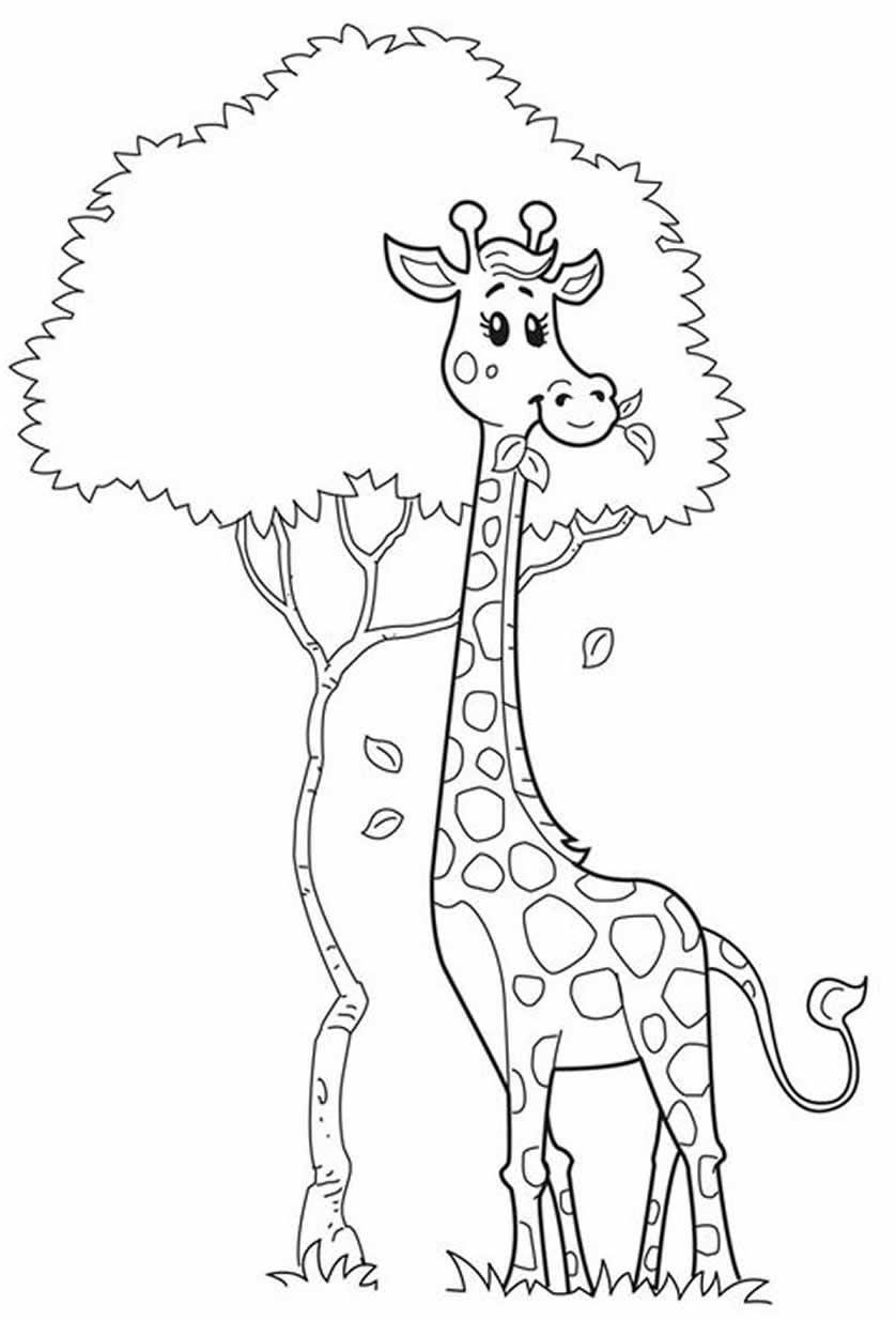 Desenhos para colorir de bichos do safari