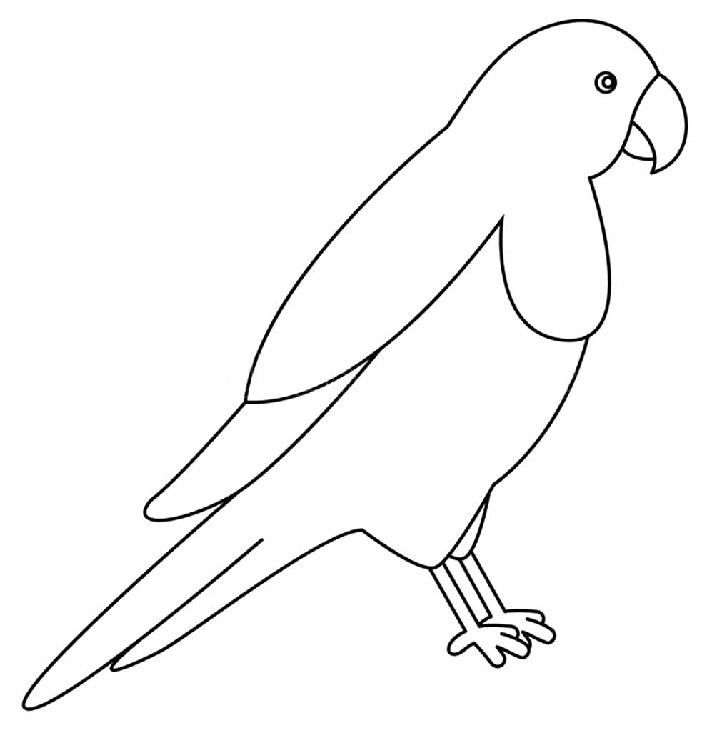 Papagaio para colorir