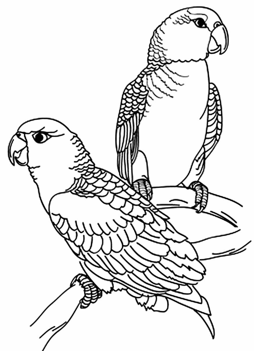 Desenho de Papagaios para pintar