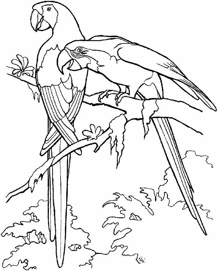Imagem de Papagaios para pintar