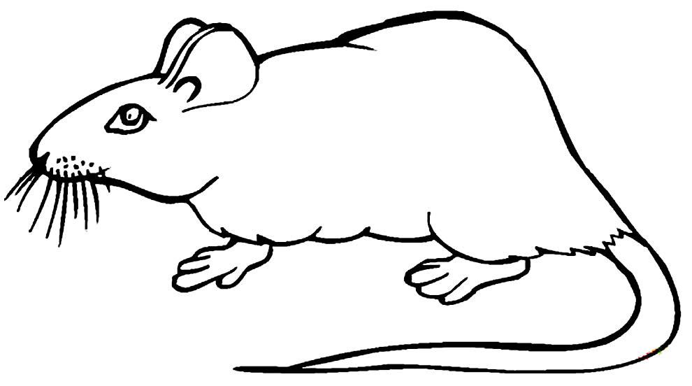 Desenho de rato para pintar