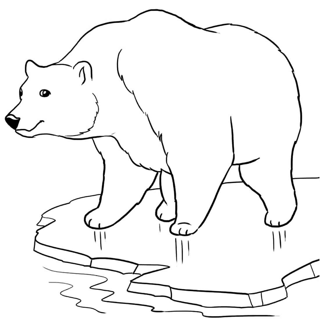 Imagem de Urso para pintar e colorir